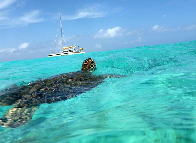 klein curacao, turtle, spotting, little curaçao,curaçao,attraction,keycaribe