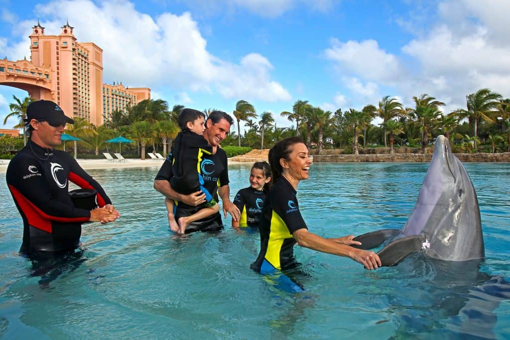 swimming-with-dolphins-bahamas