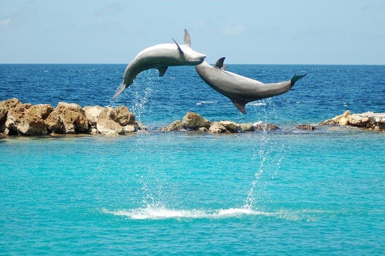dolfijnen op curacao