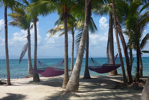 thatch caye hammocks