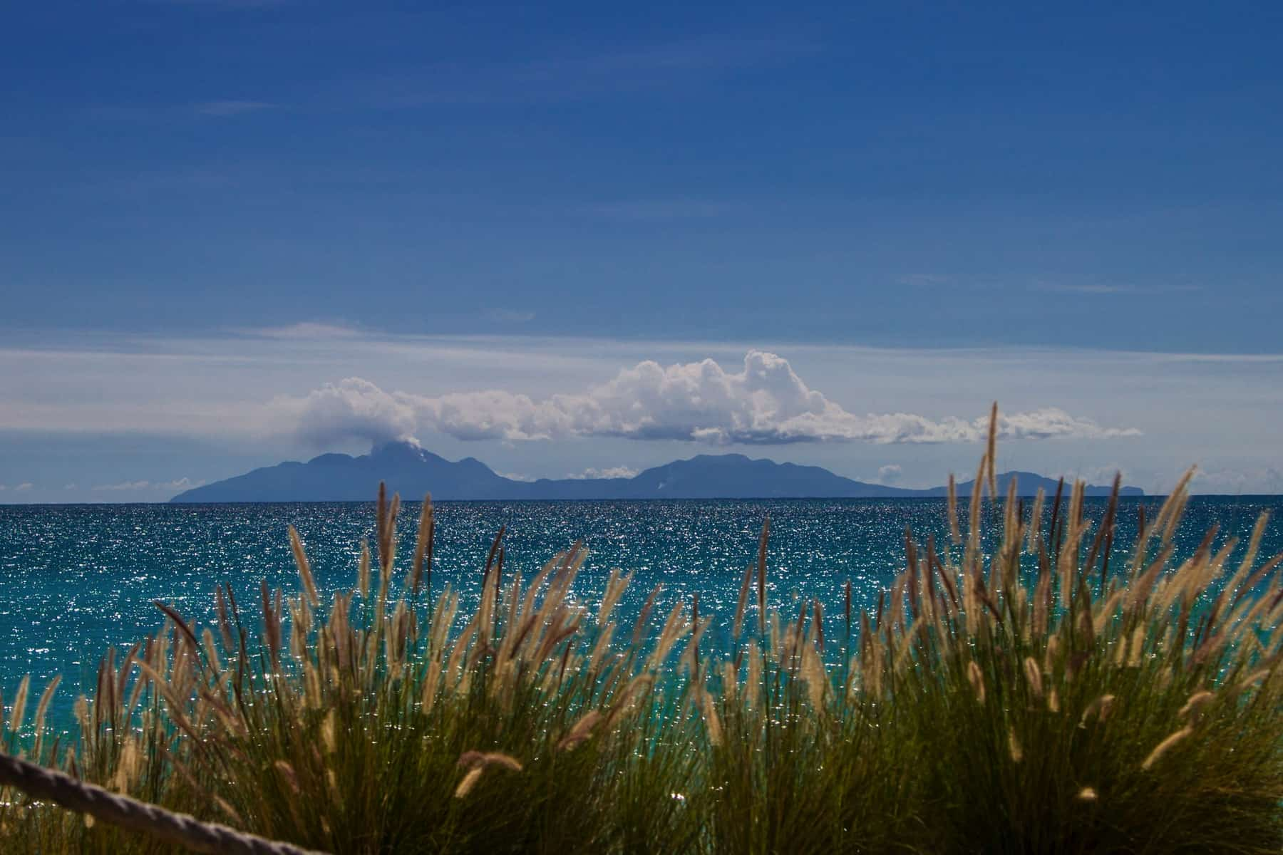 grass with ocean view